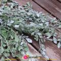 Frunze artificiale Gunii