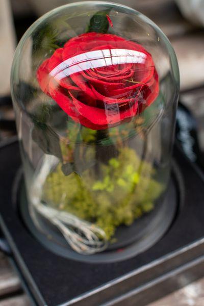 Aranjament trandafir criogenat 2 led+giftbox